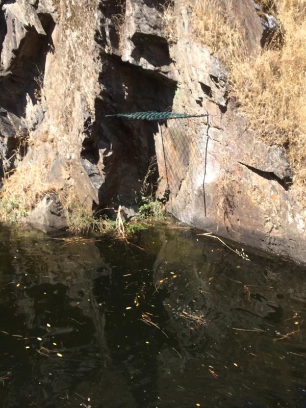 Instalación de nidos de cigüeña negra en Tajo Internacional